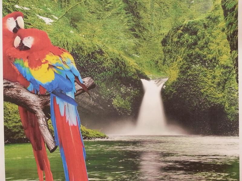 OEM Parrots