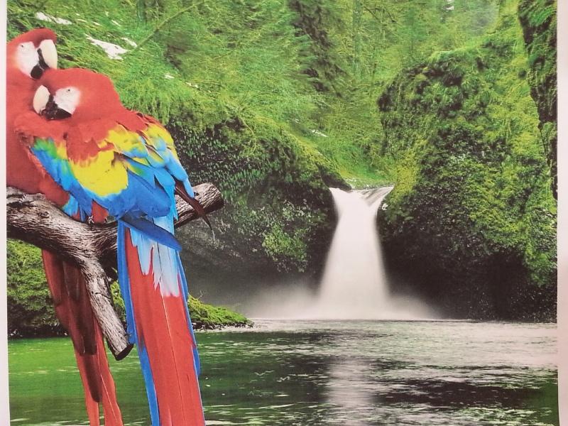 Remanufactured Parrots