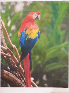 Printed picture of parrot with light stripes