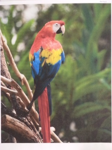 Remanufactured Parrot